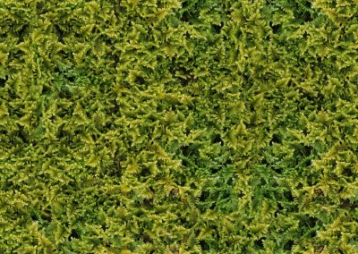 "Vertical Garden (NA3094)  : Moss, enlarged to the point where they look like small ferns. 69"" x 47.25"" repeat.© 2012 Doug Garrabrants"
