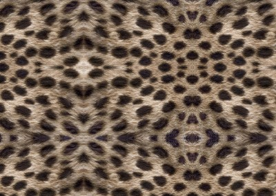 "Cheetah (NA0480) : Wallpaper pattern created from the fur of a cheetah. Up to 68"" repeat. © 2015 DOUG GARRABRANTS"