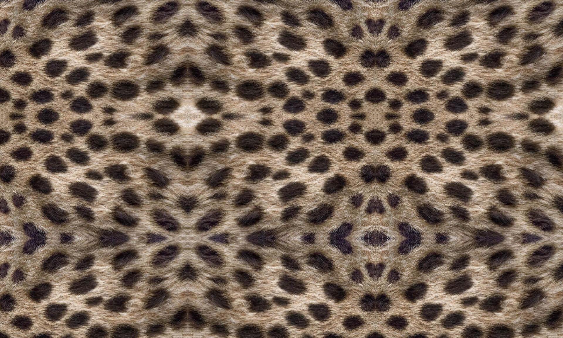 Cheetah Doug Garrabrants