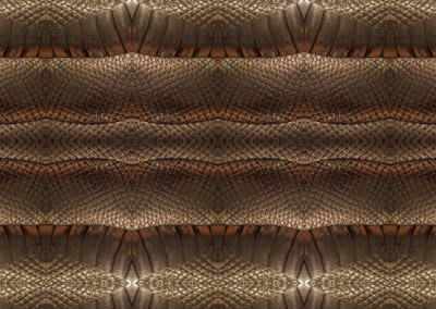 "Smaug (DE0950) : Gold or silver snake skin repeat wall covering. Max repeat 26.4"" x 43.7"". © 2015 Doug Garrabrants"