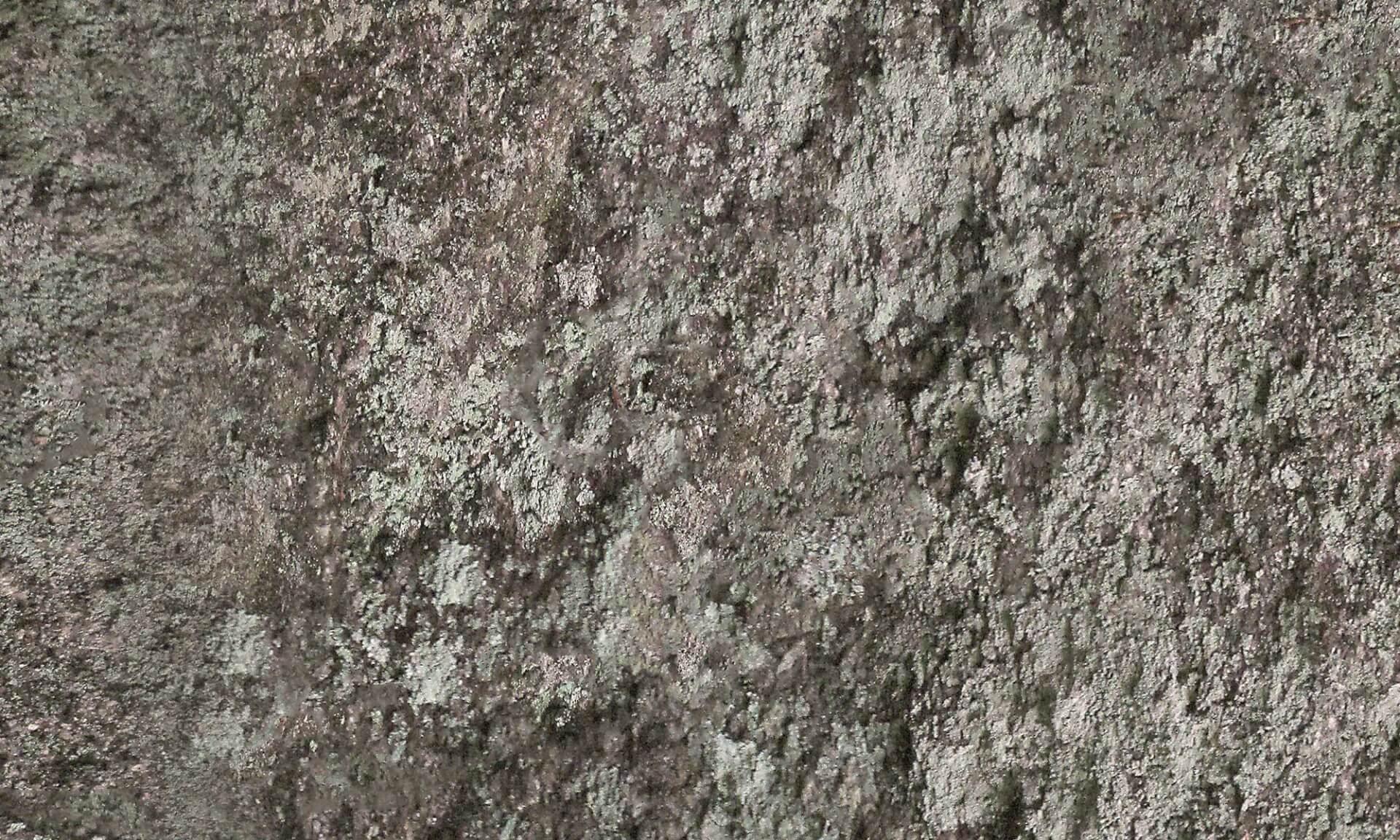 Maine Rock Wall with Lichen Doug Garrabrants