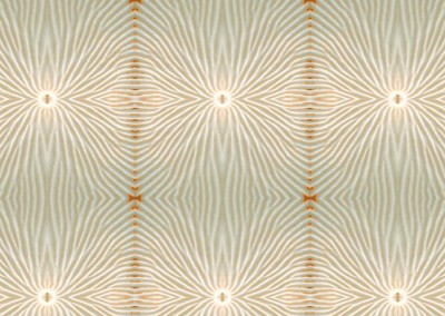 "Nautilus Flower (NA8812-Beige) : Wallpaper Pattern created from a Natulus shell. 10"" x 11"" repeat. © 2014 Doug Garrabrants"