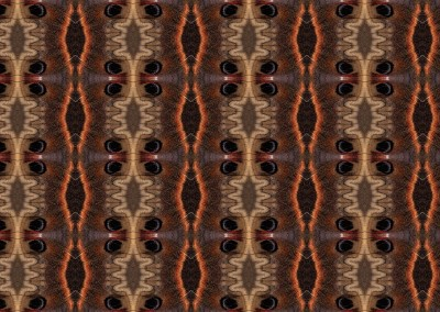 "Ikat Moth : This Ikat pattern was created from a macro photograph of a butterfly's wing, or it maybe it was a moth. It has a 7.25"" x 5"" repeat. © 2014 Doug Garrabrants"