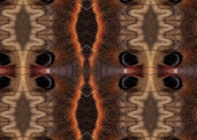 "Ikat Moth (Detail) : This Ikat pattern was created from a macro photograph of a butterfly's wing, or it maybe it was a moth. It has a 7.25"" x 5"" repeat. © 2014 Doug Garrabrants"