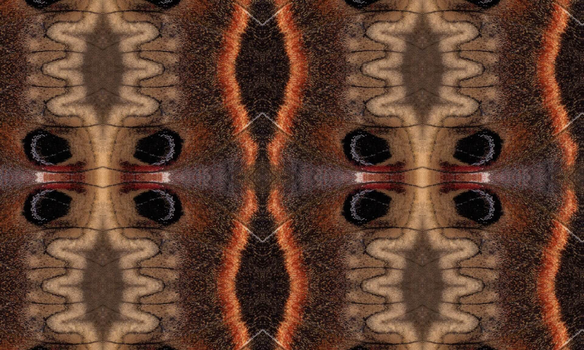 Ikat Moth - Detail