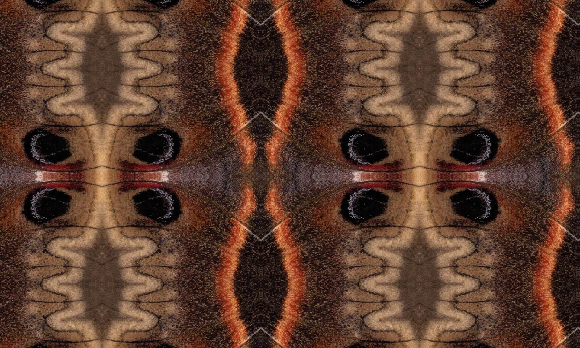 Ikat Moth - Detail