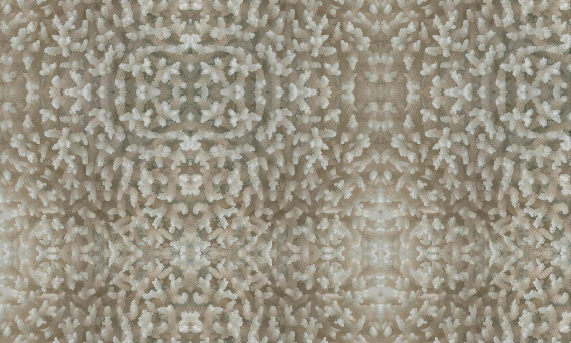 Coral (BA8826) Pattern Doug Garrabrants
