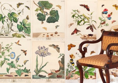 "Moses Harris Botanicals : 44 different original botanicals by Moses Harris (c. 1766), reproduced at the highest resolution and available as archival giclée prints or wallpaper. From ""The Aurelian or, Natural History of English Insects, Moths and Butterflies, London 1778"". Up to 22"" x 25"" panels. © 2013 Doug Garrabrants"
