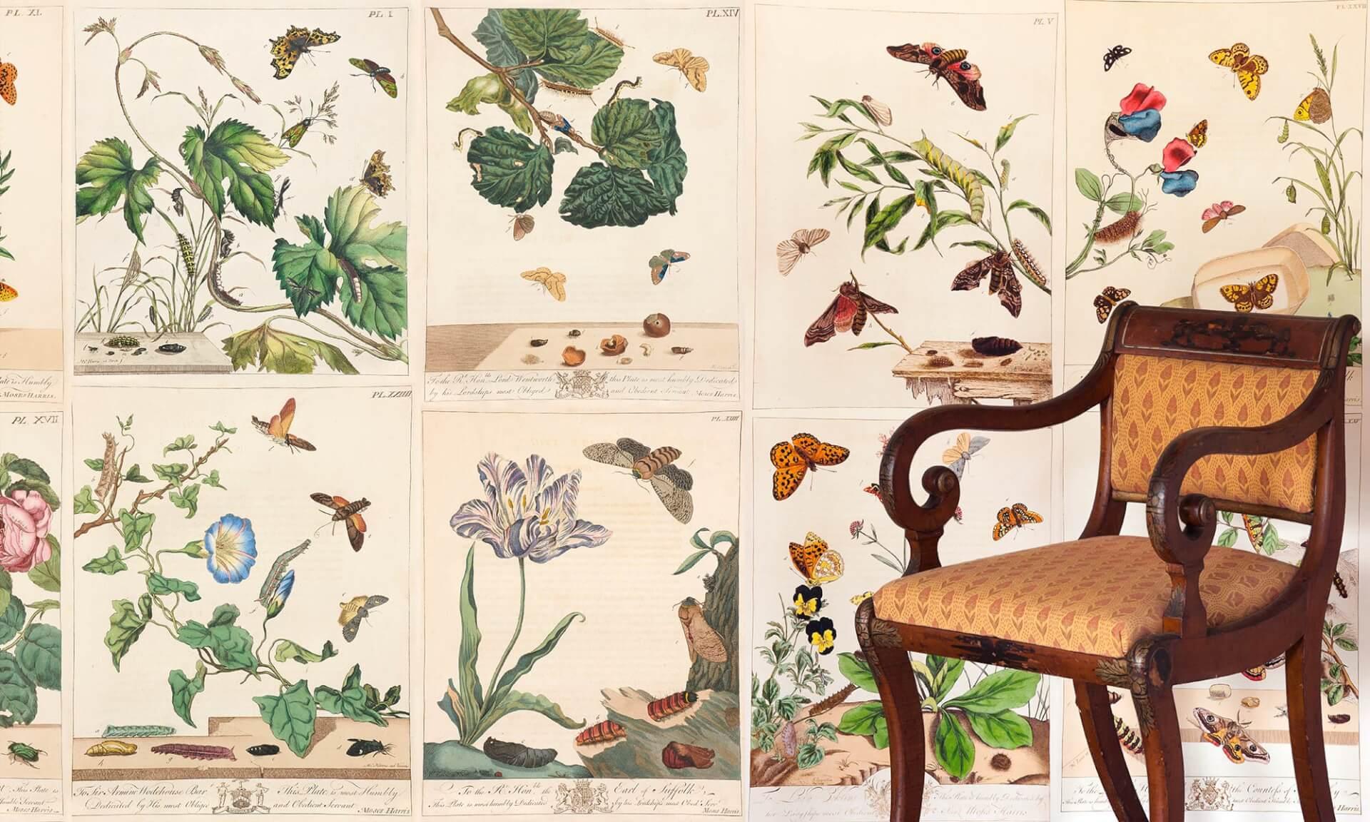 Moses Harris Botanicals