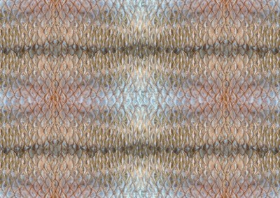 "Dragon Hyde / Margate (BA1071B)-Thin-Stripe : Wallpaper Pattern created from a Margate's scales. Repeat up to 30.5""w x17.5""h.. © Doug Garrabrants 2014"