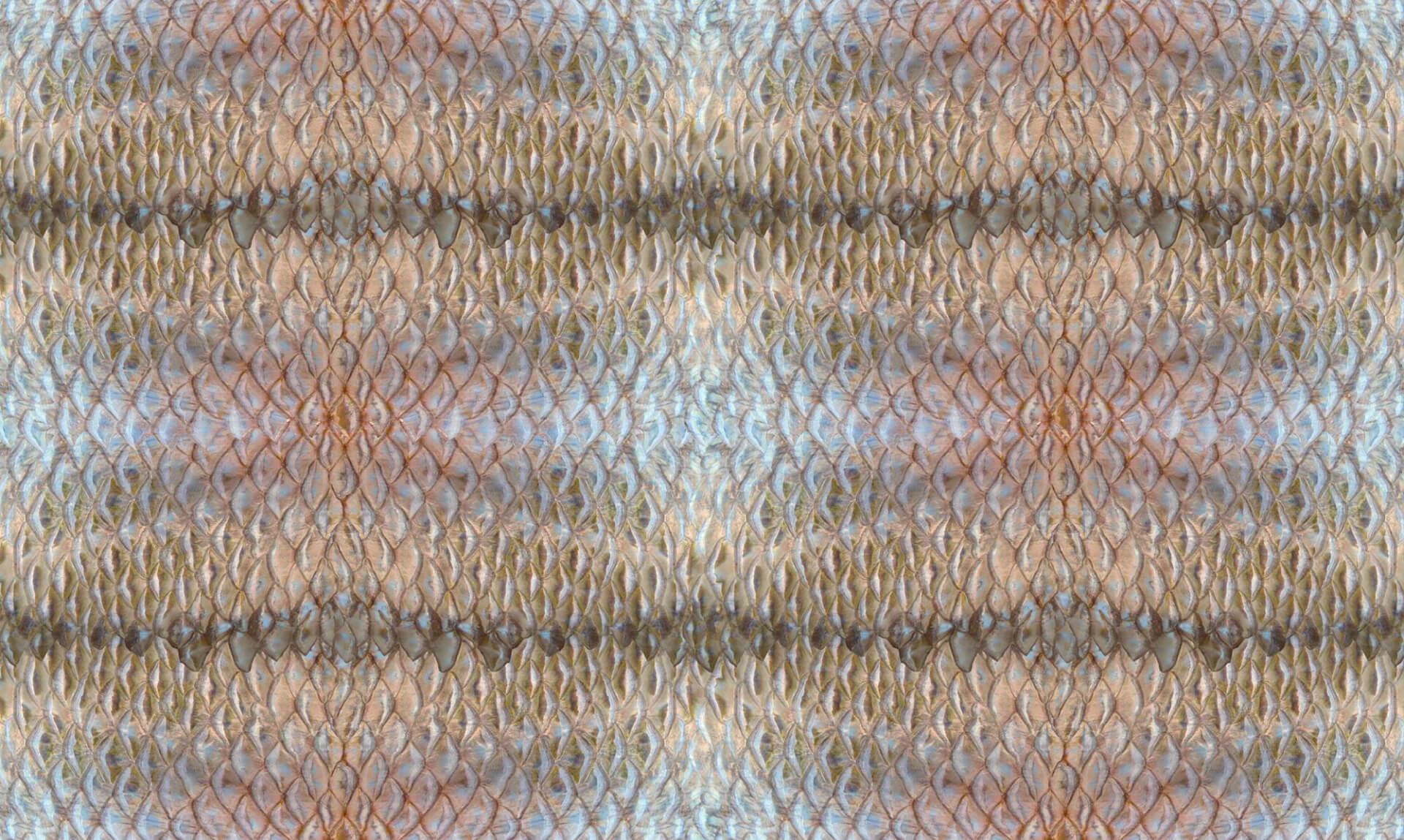 Dragon Scale / Margate BA1071 Doug Garrabrants
