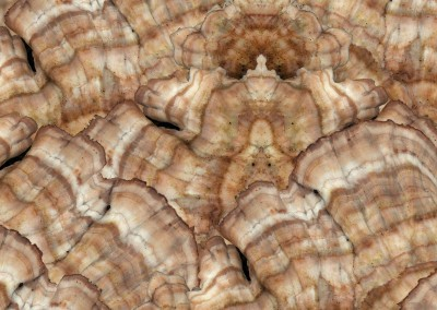 "Mushroom (NA3110B)-Detail : Nature has it's own beauty. This pattern produced from a group of mushrooms has a repeat of 29"" x 23"". © 2012 Doug Garrabrants"
