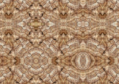 "Mushroom (NA3110B) : Nature has it's own beauty. This pattern produced from a group of mushrooms has a repeat of 29"" x 23"". © 2012 Doug Garrabrants"