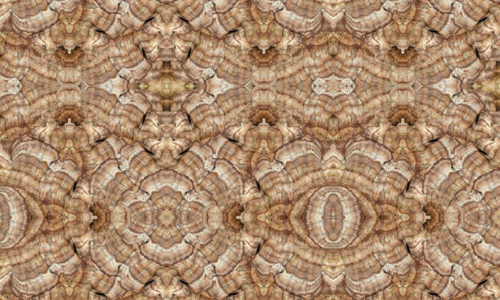 Mushroom (NA3110B)