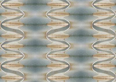 "Nautilus Helix (NA8823) : Wallpaper Pattern created from a Natulus shell. 67""w max repeat. © 2014 Doug Garrabrants"