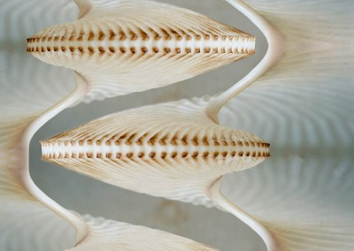"Nautilus Helix (NA8823)-Detail : Wallpaper Pattern created from a Natulus shell. 67""w max repeat. © 2014 Doug Garrabrants"