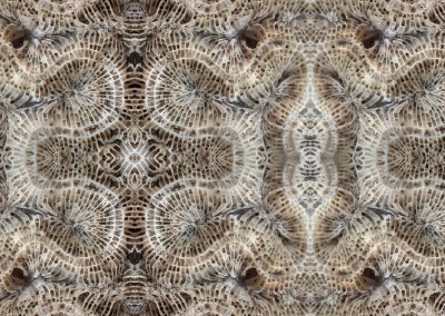 Coral (BA1037) : Wallpaper Pattern created from a photograph of a bit of dried up coral on a sandbar at Hogsty Reef located at 21°41′N 73°49′W. © 2014 Doug Garrabrants