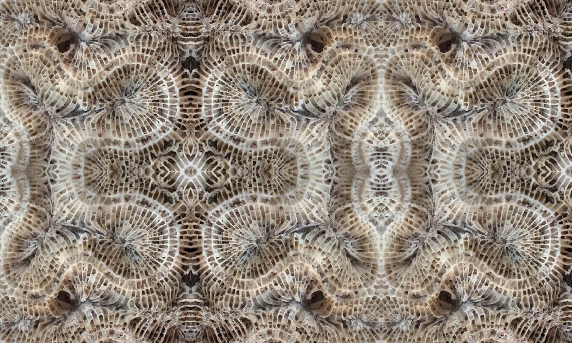 Coral (BA1037) Pattern Doug Garrabrants