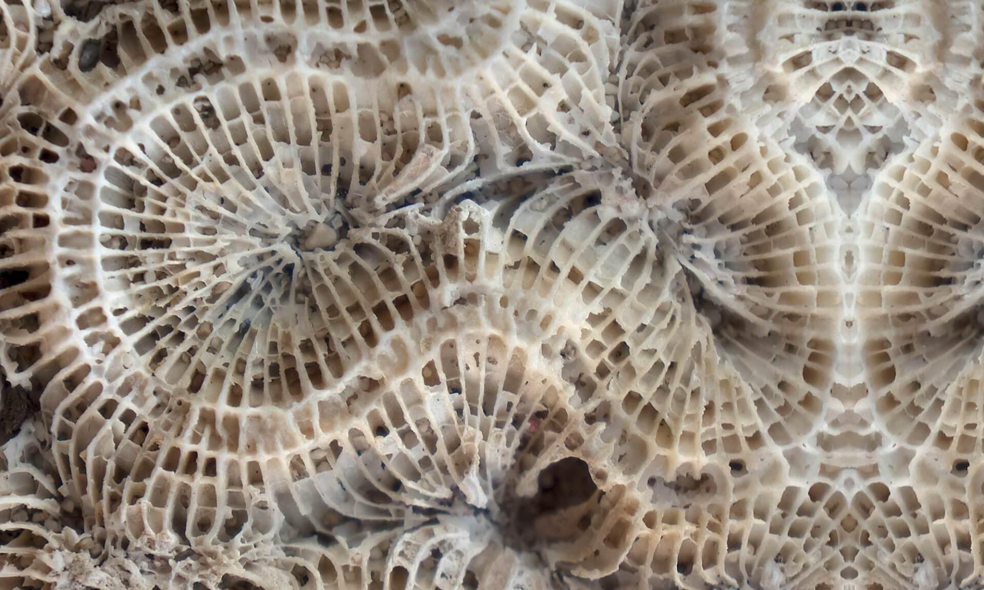 Coral (BA1037) Doug Garrabrants