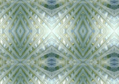 Margate Fin (BA1086-Detail) : Wallpaper Pattern created from a Margate's Fin. Repeat 23.86w x 23.89h.  © Doug Garrabrants 2014