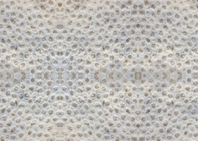 "Coral (BA1010): Wallpaper Pattern created from a photograph of coral. Max Repeat 31.5"". © Doug Garrabrants 2014"