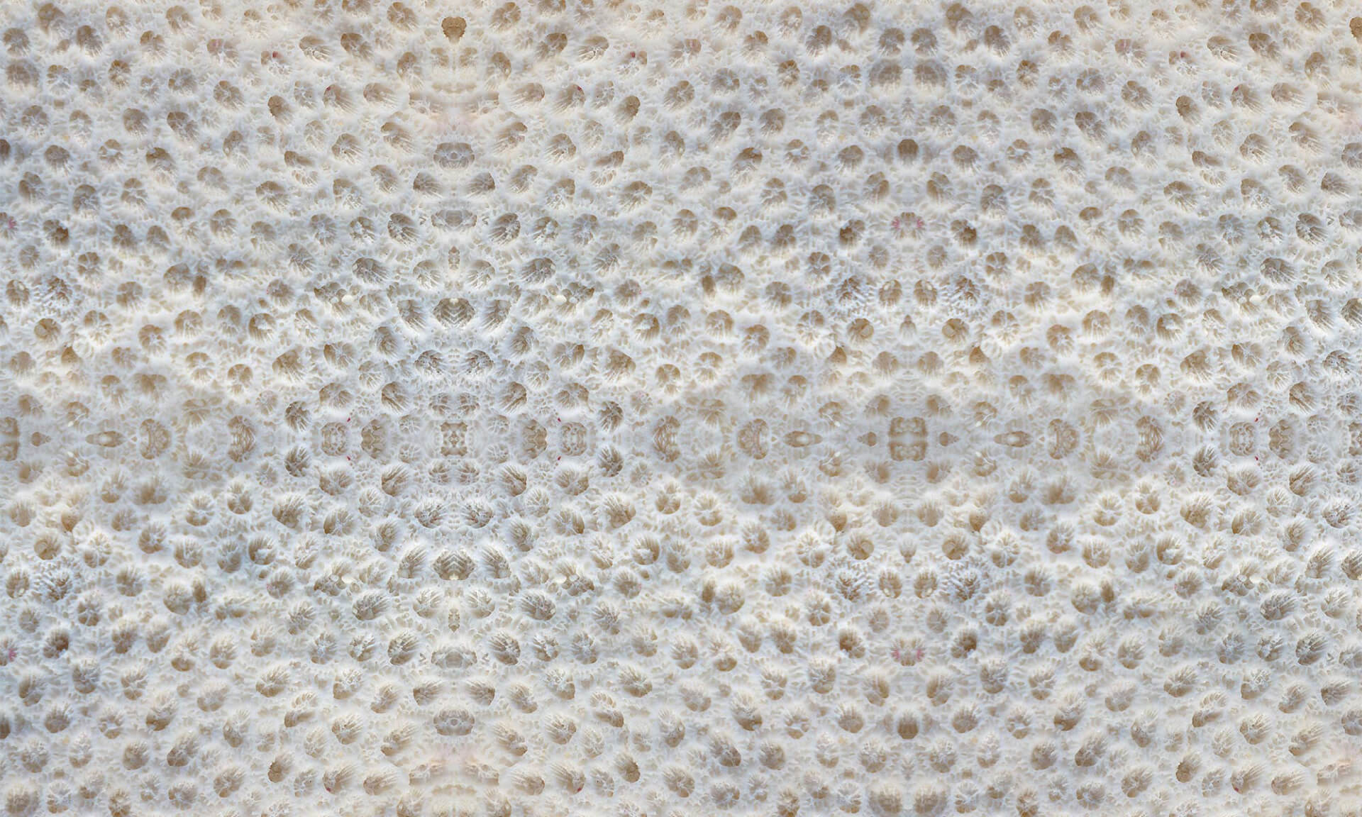 Coral (BA1010) Doug Garrabrants