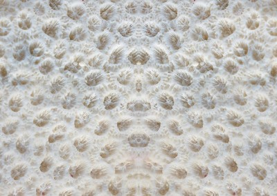 "Coral (BA1010)-Detail : Wallpaper Pattern created from a photograph of coral. Max Repeat 31.5"". © Doug Garrabrants 2014"