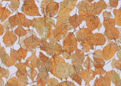 "Fall Leaves (NA4124)-Random-2 : Pattern composed of the fine tracery of partally decomposed fall leaves. Repeat - 41""w x 24""h with 1/2 drop. © Doug Garrabrants 2013"