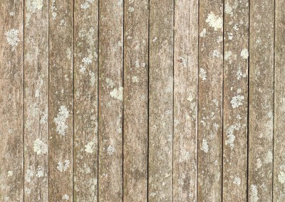 "Rustic (NA5585)-Detail : Weathered slats of teak with lichen growth. 30.8"" repeat weith half drop. © 2011 DOUG GARRABRANTS"