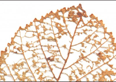 Fall Leaves (NA4124)-Detail of Single Leaf