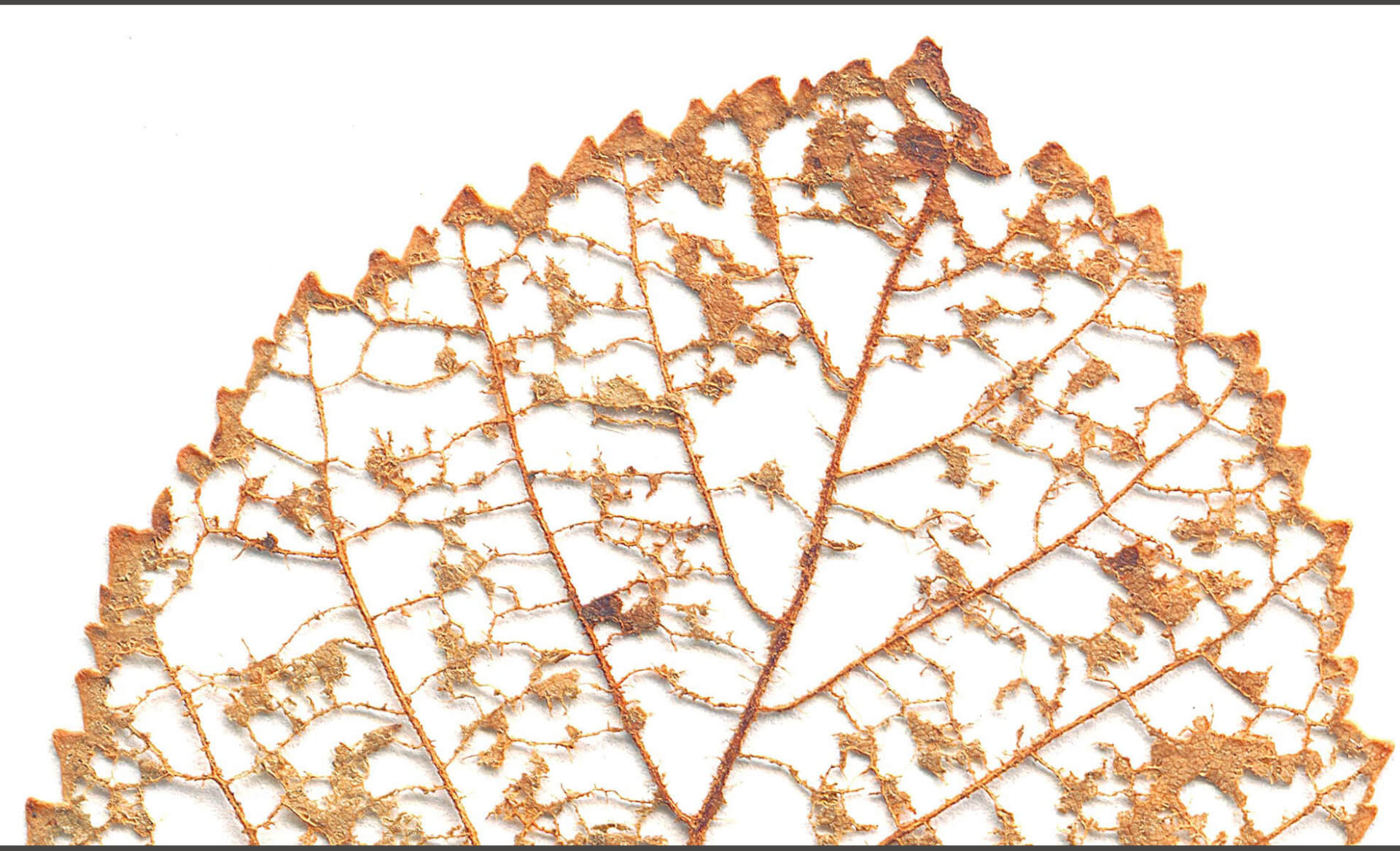 Fall Leaves Layered Doug Garrabrants