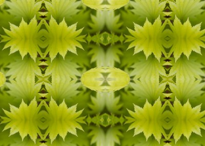 "Maple (NA4949)-Detail : Here is what happens when you capture an early spring photo of budding Maple leaves with a narrow depth of field and then turn it into a kaleidoscopic pattern. 50.5"" x 33"" repeat at 100% which makes the maple leaf 20"" high (wide) at it's widest point. We prefer to print this pattern at 16%, Making the leaf about 3"" wide.: © 2011 DOUG GARRABRANTS"