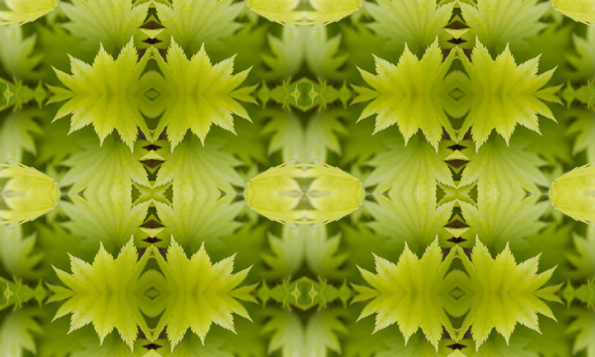 Maple Doug Garrabrants-Zoë Design