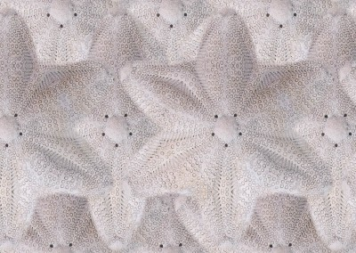 "Sea Biscuit Stars (Detail) : Pattern created from Bahamian sea buscuits. 8.7"" x 9.4"" repeat. © 2015 Doug Garrabrants"