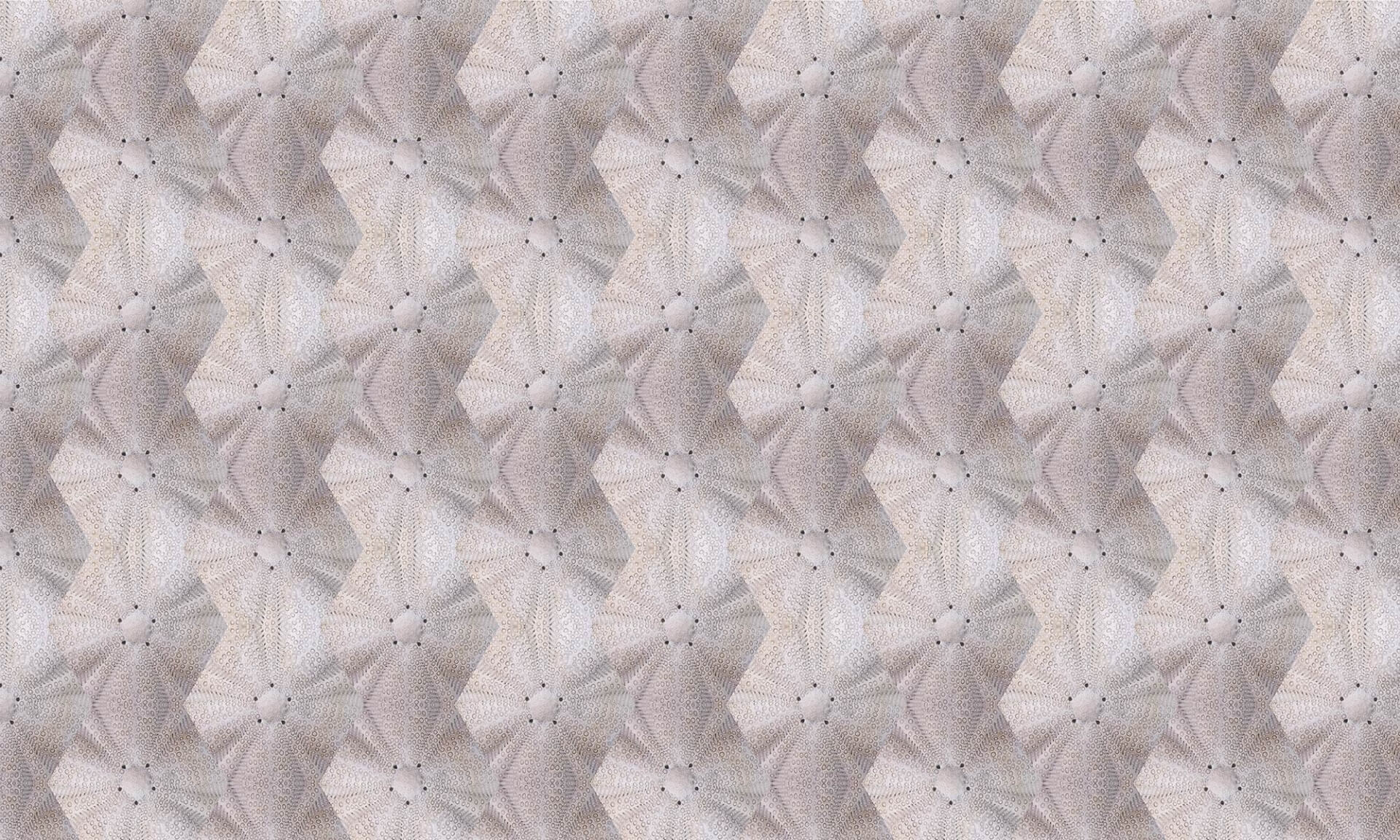 Sea Biscuit Polygon 1300