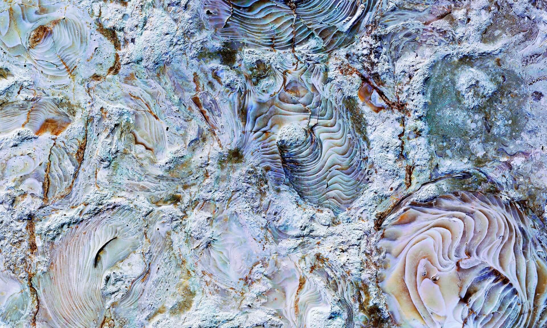 Coral Stone 4 Doug Garrabrants
